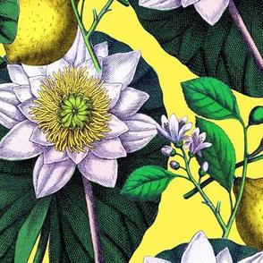 Vintage Water Lotus  + Lemons