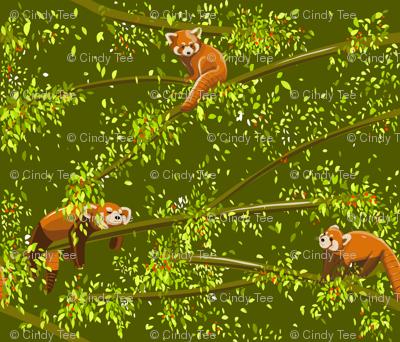 Hello Red Pandas!
