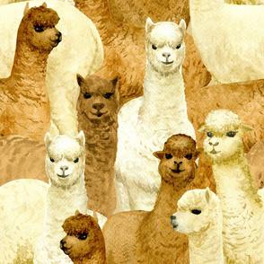 alpacas (large scale)