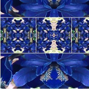 Iris butterfly