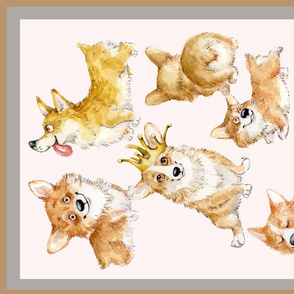 Cute Corgi  Puppies   Inga Izmaylova Dogs