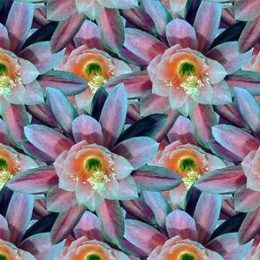 Cactus drama