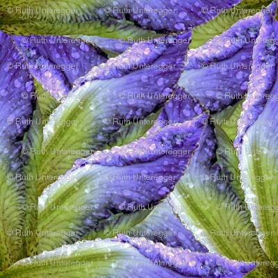 Iris 1 bright