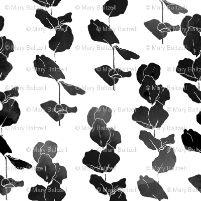 Eucalyptus  Leaves Black  &  White