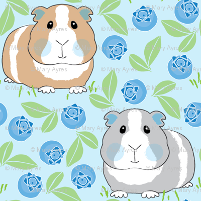 guinea-pigs-with-blueberries