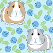 Rguinea-pigs-with-blueberries_shop_thumb