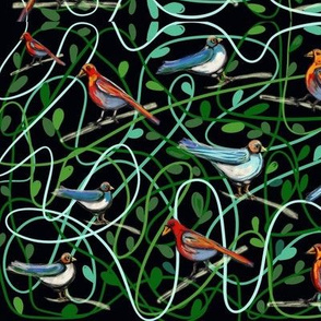 Birdy life