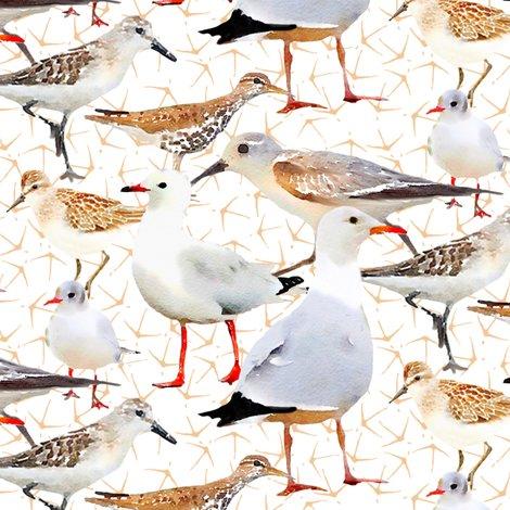 R7652285redone_rcoastalbirdstestingfinal_shop_preview
