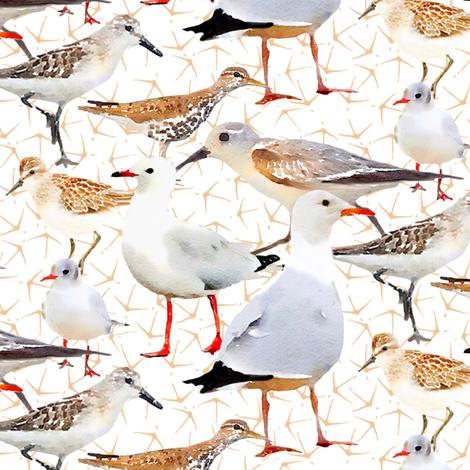 Coastal Birds with tiny bird foot print fabric by lauriekentdesigns on Spoonflower - custom fabric