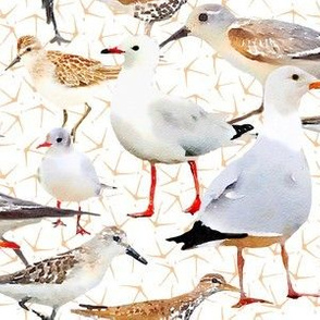 Coastal Birds with tiny bird foot print
