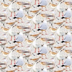 Coastal Birds on Gray
