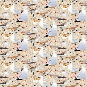 Coastal Birds on Darker Tan with Bird Prints