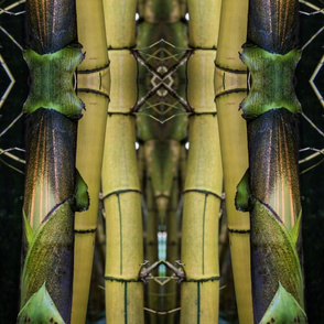 Lime Bamboo