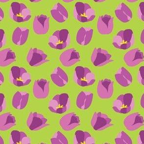 Tulip Dots