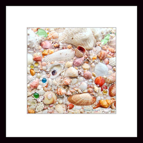 Seashell Collection 2' x 2' Wallpaper Poster