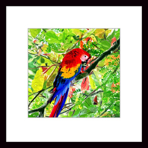 Scarlet Macaw Painting 2' x 2' Wallpaper Poster