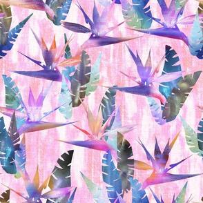 birdie tropical pink