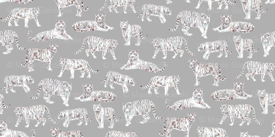 White Bengal Tiger | Grey Background