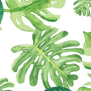 Monstera leaf large