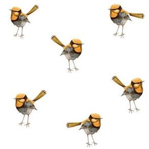 Golden Wrens Scattered on White