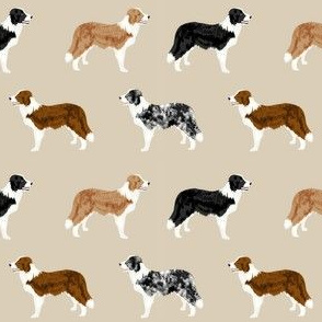 border collie mixed coats dog breed fabric tan