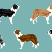 Rborder-collie-mixed_shop_thumb