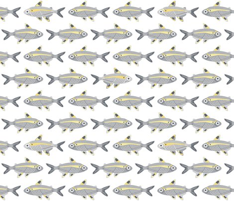 Rrmostly-happy-x-ray-tetras_shop_preview