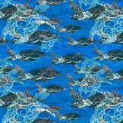 sea turtless