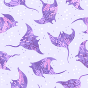 Beautiful mantas