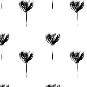 Monochrome dandelions