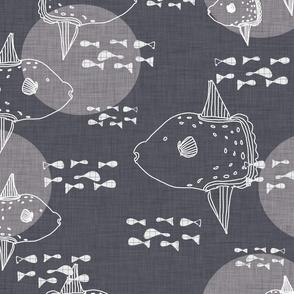 Mola Mola Grey-Ocean sunfish