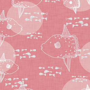 Mola Mola Pink-Ocean sunfish