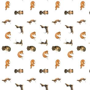 yoga dachshund
