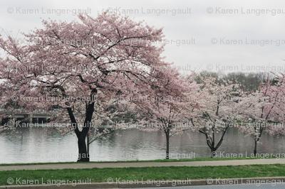 KRLGFP-CherryBlossomsPlacemats