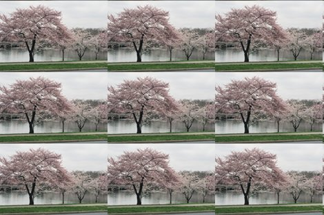 Rrkrlgfp-cherryblossomsplacemats_shop_preview