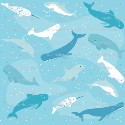 Marine Mammal Ocean