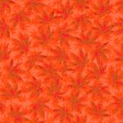 Indica Safety Orange
