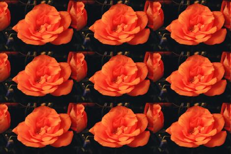 KRLGFP-ORANGE ROSE PLACEMATS fabric by karenspix on Spoonflower - custom fabric