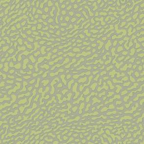 Moray, in ocean green