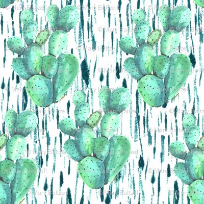 Cactus in the rain