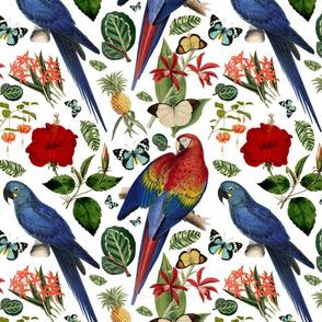 Tropical Macaw White