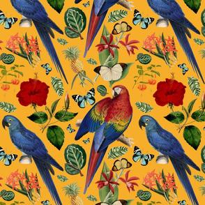 Tropical Macaw Orange
