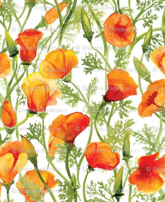 California Poppies - Large