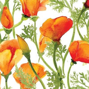 California Poppies - Large