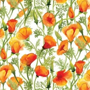 California Poppies - Small