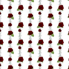 TANGLED ROSES