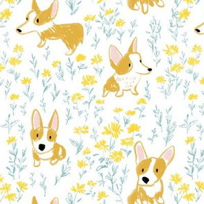 Corgi dogs and daisy flo