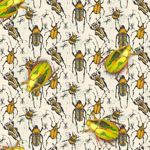 golden beetles and other beetles