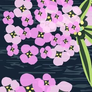 Alyssum - Jumbo Pink & Navy