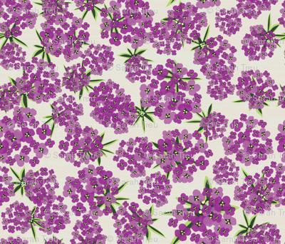 Alyssum - Jumbo Purple